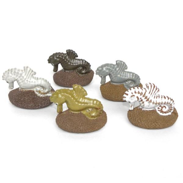 Scrubsteen 'Zeepaardje'